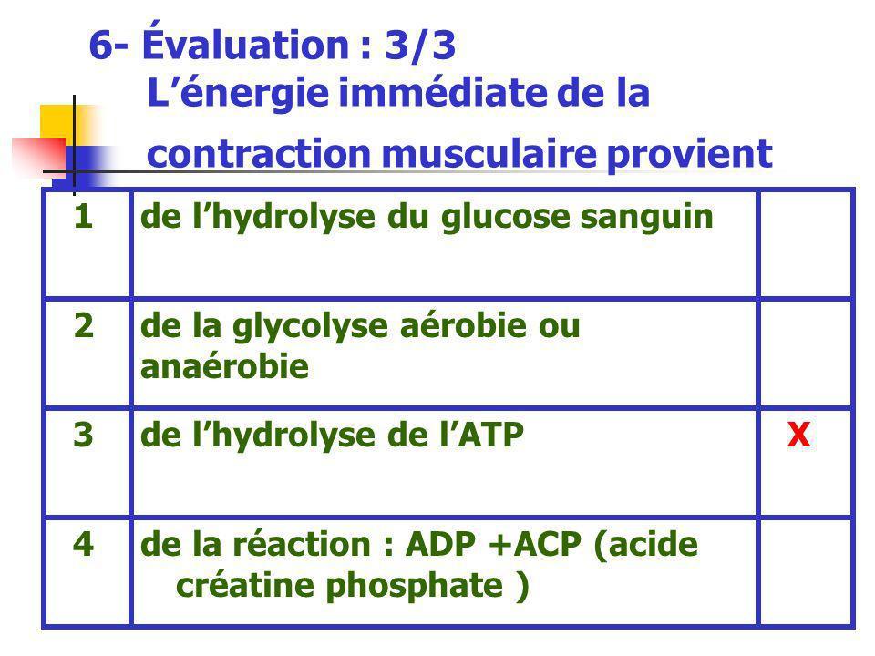 6- Évaluation : 3/3 Lénergie immédiate de la contraction musculaire provient de la réaction : ADP +ACP (acide créatine phosphate ) 4 Xde lhydrolyse de lATP 3 de la glycolyse aérobie ou anaérobie 2 de lhydrolyse du glucose sanguin 1
