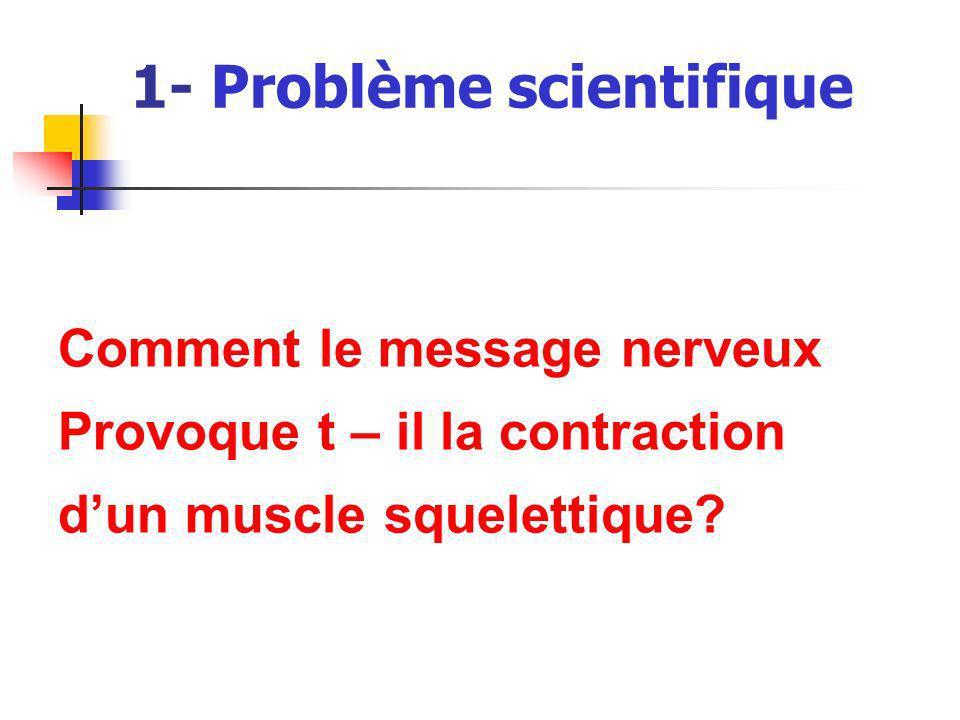 1- Problème scientifique Comment le message nerveux Provoque t – il la contraction dun muscle squelettique?