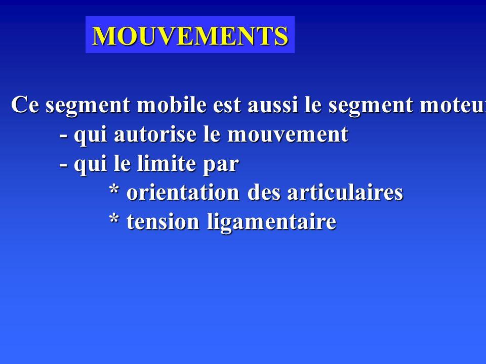 MOUVEMENTS Ce segment mobile est aussi le segment moteur - qui autorise le mouvement - qui le limite par * orientation des articulaires * tension ligamentaire