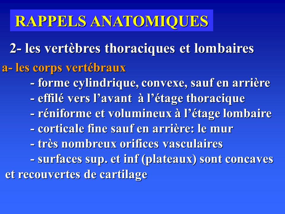 RAPPELS ANATOMIQUES 2- les vertèbres thoraciques et lombaires a- les corps vertébraux - forme cylindrique, convexe, sauf en arrière - effilé vers lavant à létage thoracique - réniforme et volumineux à létage lombaire - corticale fine sauf en arrière: le mur - très nombreux orifices vasculaires - surfaces sup.
