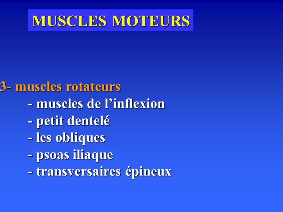 MUSCLES MOTEURS 3- muscles rotateurs - muscles de linflexion - petit dentelé - les obliques - psoas iliaque - transversaires épineux