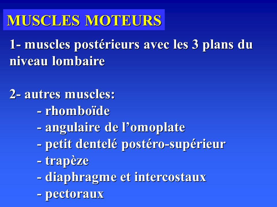 MUSCLES MOTEURS 1- muscles postérieurs avec les 3 plans du niveau lombaire 2- autres muscles: - rhomboïde - angulaire de lomoplate - petit dentelé postéro-supérieur - trapèze - diaphragme et intercostaux - pectoraux