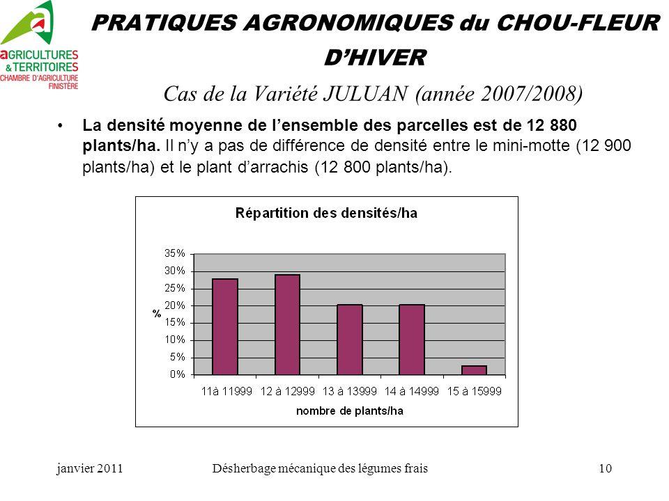 janvier 2011Désherbage mécanique des légumes frais10 PRATIQUES AGRONOMIQUES du CHOU-FLEUR DHIVER Cas de la Variété JULUAN (année 2007/2008) La densité moyenne de lensemble des parcelles est de 12 880 plants/ha.