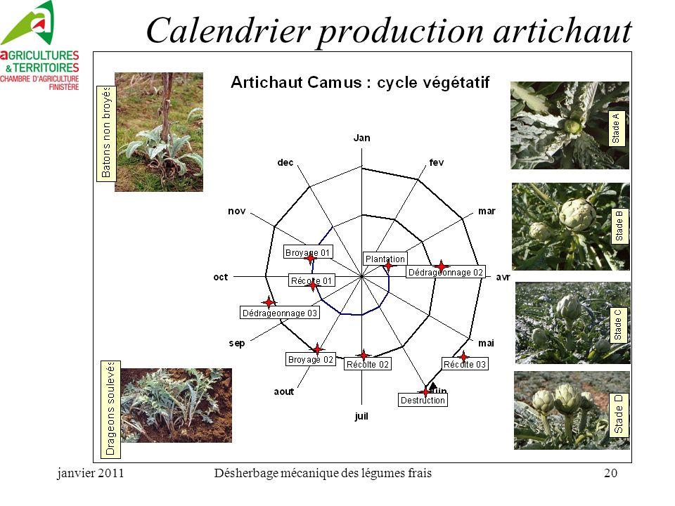 janvier 2011Désherbage mécanique des légumes frais20 Calendrier production artichaut