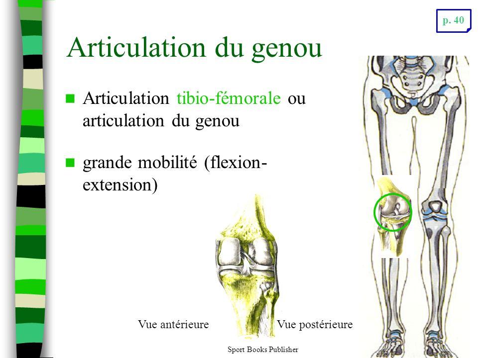 Sport Books Publisher29 Articulation du genou Articulation tibio-fémorale ou articulation du genou grande mobilité (flexion- extension) Vue antérieureVue postérieure p.