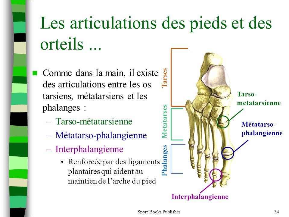 Sport Books Publisher34 Les articulations des pieds et des orteils... Comme dans la main, il existe des articulations entre les os tarsiens, métatarsi