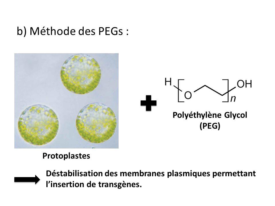 b) Méthode des PEGs : Polyéthylène Glycol (PEG) Déstabilisation des membranes plasmiques permettant linsertion de transgènes. Protoplastes