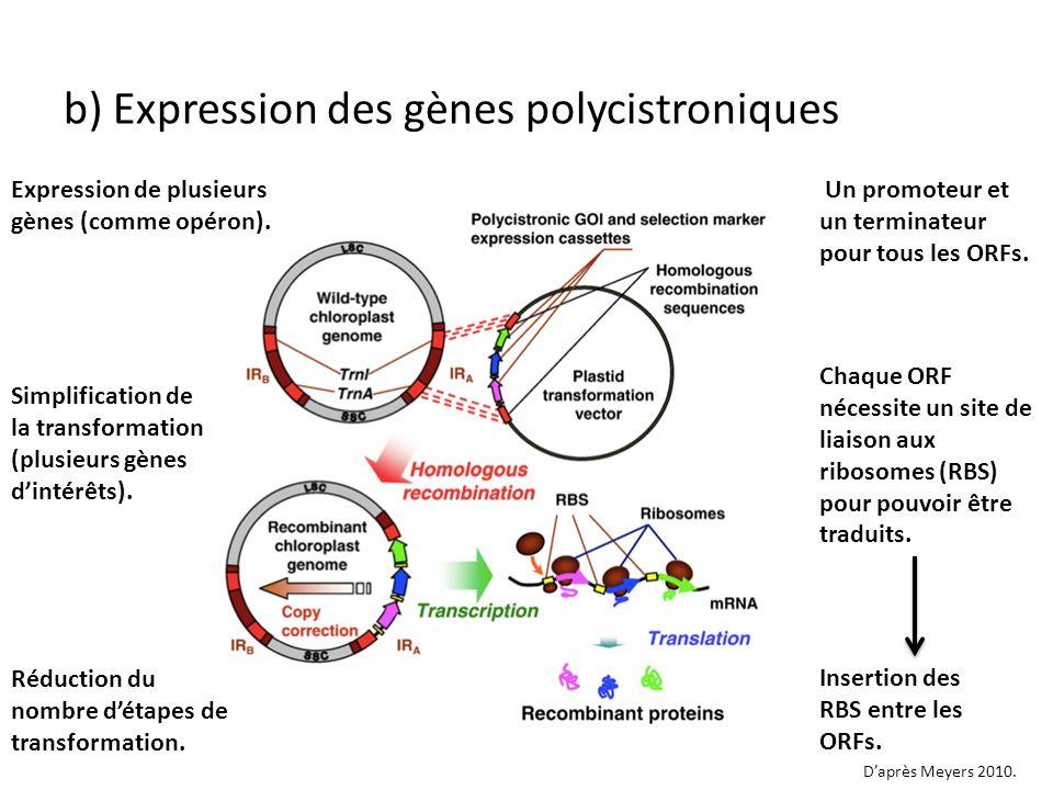 Expression de plusieurs gènes (comme opéron). Un promoteur et un terminateur pour tous les ORFs. b) Expression des gènes polycistroniques Simplificati