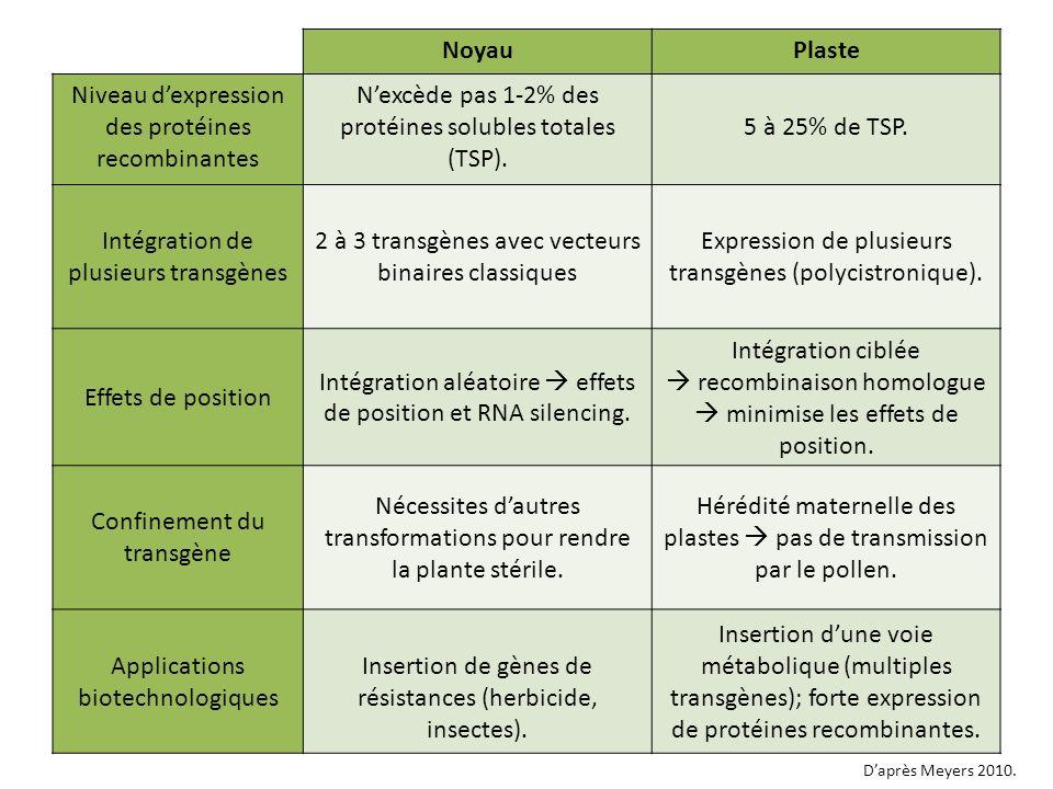 NoyauPlaste Niveau dexpression des protéines recombinantes Nexcède pas 1-2% des protéines solubles totales (TSP). 5 à 25% de TSP. Intégration de plusi
