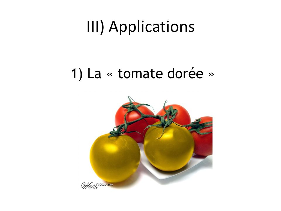 III) Applications 1) La « tomate dorée »