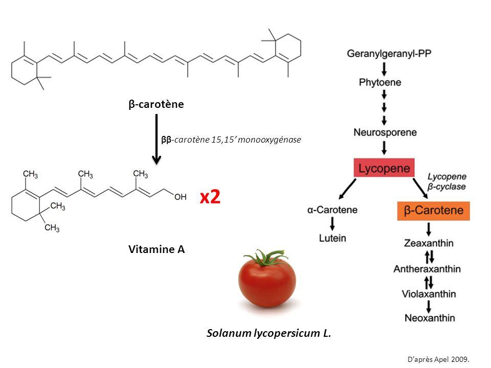 Vitamine A β-carotène Solanum lycopersicum L. Daprès Apel 2009. x2 ββ-carotène 15,15 monooxygénase