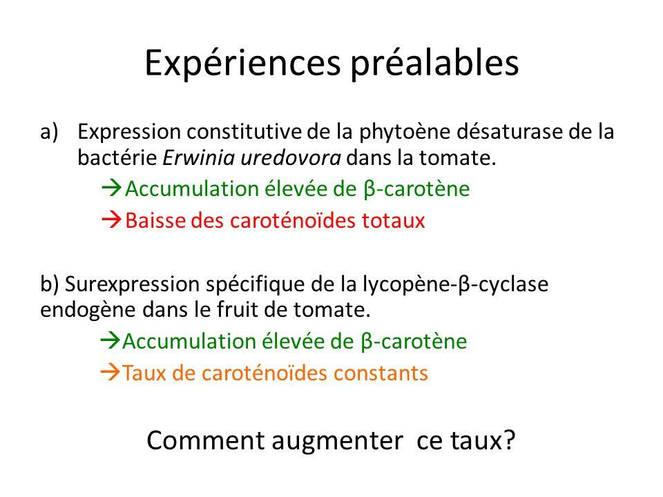 Expériences préalables a)Expression constitutive de la phytoène désaturase de la bactérie Erwinia uredovora dans la tomate. Accumulation élevée de β-c