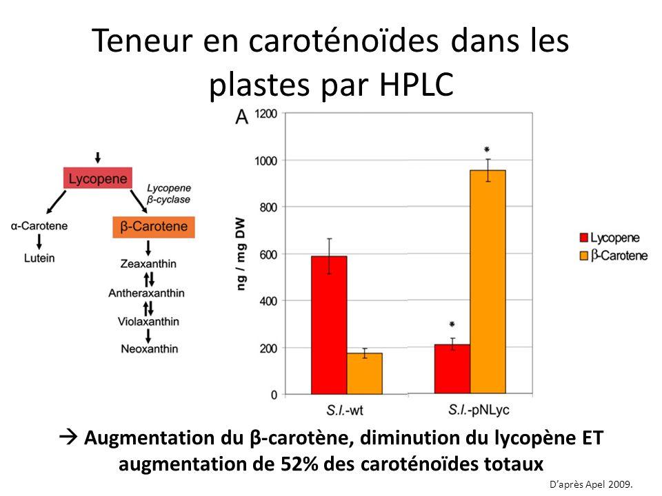 Teneur en caroténoïdes dans les plastes par HPLC Augmentation du β-carotène, diminution du lycopène ET augmentation de 52% des caroténoïdes totaux Dap
