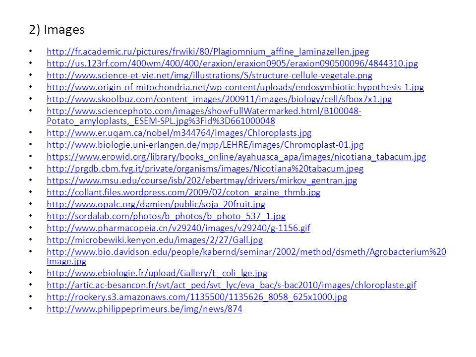 2) Images http://fr.academic.ru/pictures/frwiki/80/Plagiomnium_affine_laminazellen.jpeg http://us.123rf.com/400wm/400/400/eraxion/eraxion0905/eraxion0