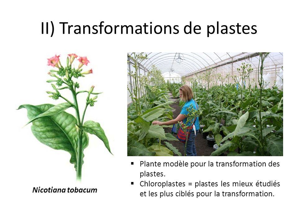 II) Transformations de plastes Plante modèle pour la transformation des plastes. Chloroplastes = plastes les mieux étudiés et les plus ciblés pour la