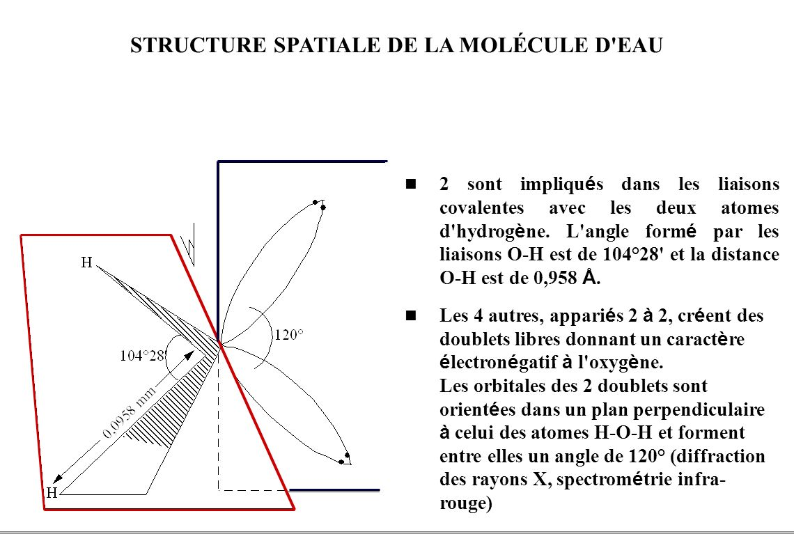PCEM1 – Biophysique- 6 - STRUCTURE SPATIALE DE LA MOLÉCULE D'EAU 2 sont impliqu é s dans les liaisons covalentes avec les deux atomes d'hydrog è ne. L