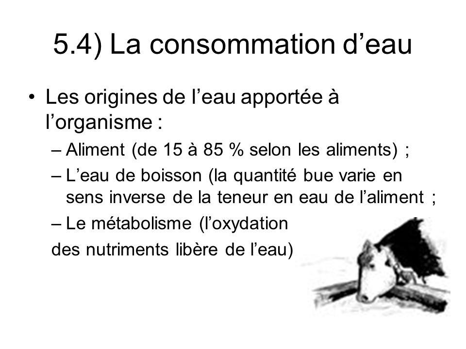 Les origines de leau apportée à lorganisme : –Aliment (de 15 à 85 % selon les aliments) ; –Leau de boisson (la quantité bue varie en sens inverse de la teneur en eau de laliment ; –Le métabolisme (loxydation des nutriments libère de leau) 5.4) La consommation deau