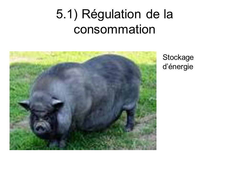 Facteurs de variation de la CI 5.3) Variations de lingestion chez les ruminants Poids vif ; Niveau de production ; Etat physiologique ; Type génétique ; Etat dengraissement.