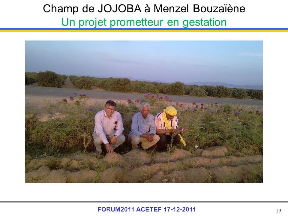 13 FORUM2011 ACETEF 17-12-2011 Champ de JOJOBA à Menzel Bouzaïène Un projet prometteur en gestation