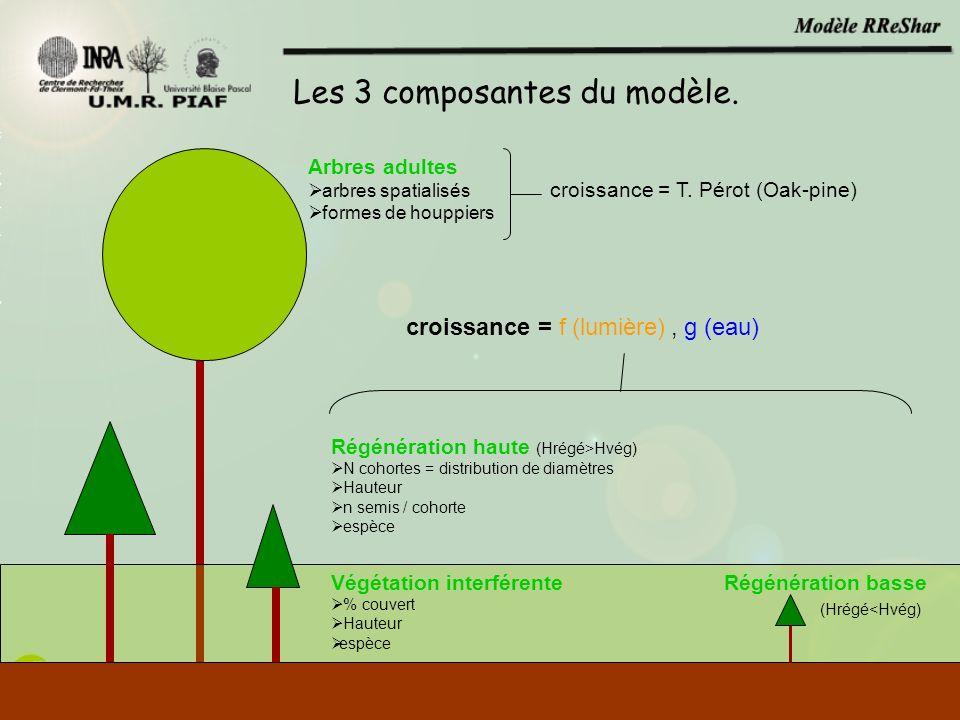 Arbres adultes arbres spatialisés formes de houppiers Régénération haute (Hrégé>Hvég) N cohortes = distribution de diamètres Hauteur n semis / cohorte