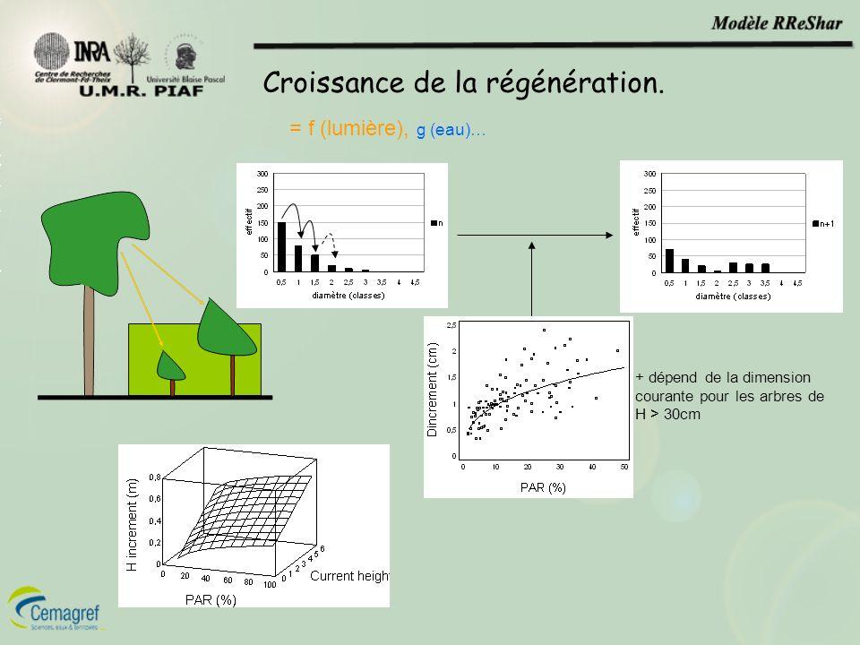 Croissance de la régénération. = f (lumière), g (eau)… + dépend de la dimension courante pour les arbres de H > 30cm