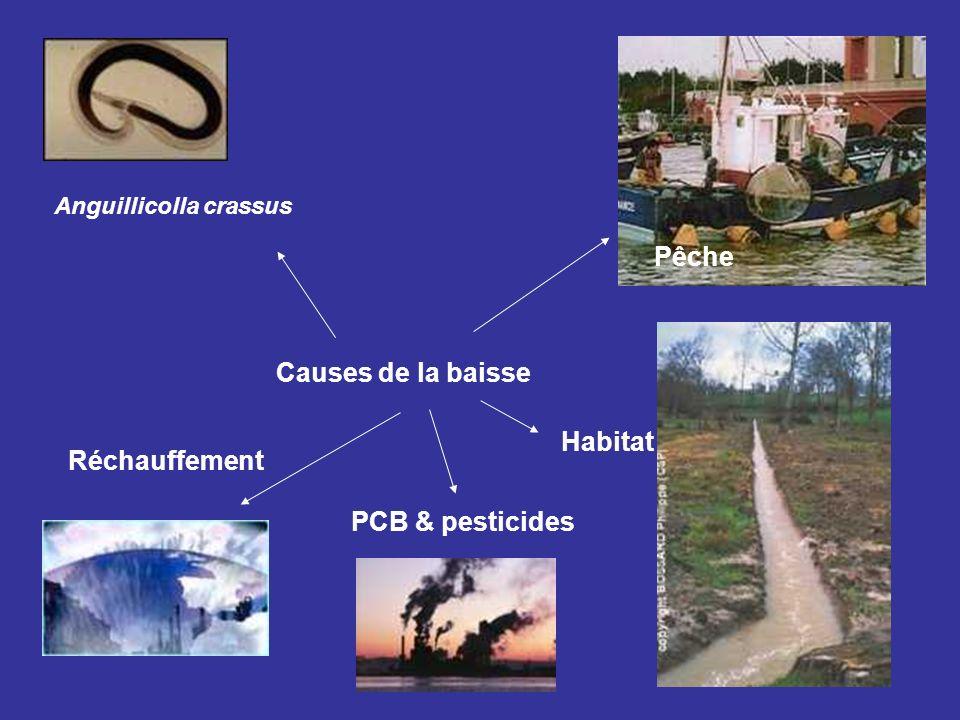 Causes de la baisse Anguillicolla crassus Pêche Habitat PCB & pesticides Réchauffement