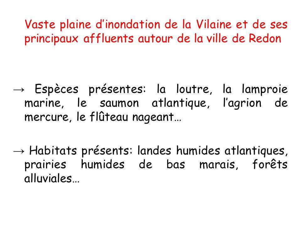 Vaste plaine dinondation de la Vilaine et de ses principaux affluents autour de la ville de Redon Espèces présentes: la loutre, la lamproie marine, le