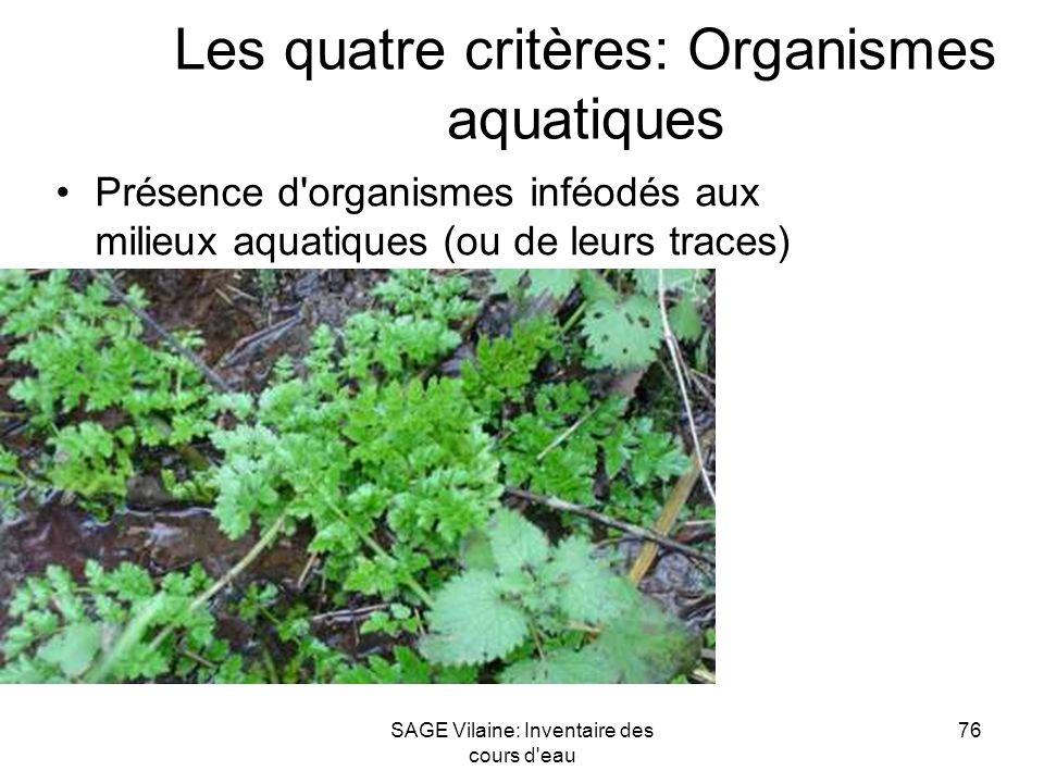 SAGE Vilaine: Inventaire des cours d'eau 76 Les quatre critères: Organismes aquatiques Présence d'organismes inféodés aux milieux aquatiques (ou de le