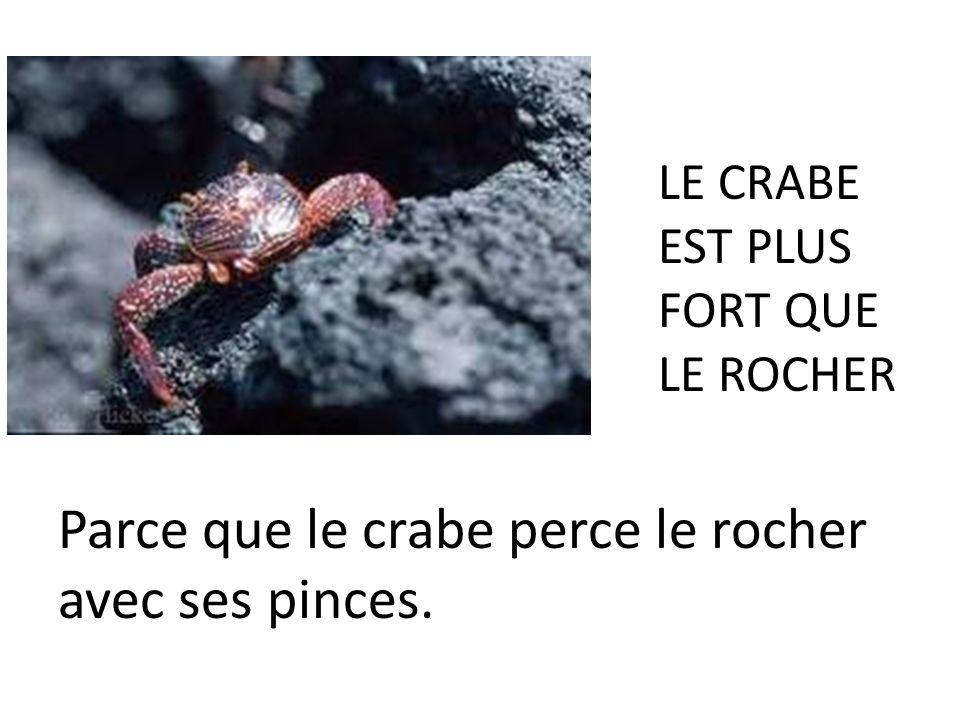MAIS, le rocher, est-il le plus fort? NON, le rocher nest pas le plus fort. Le rocher est moins fort que le crabe.