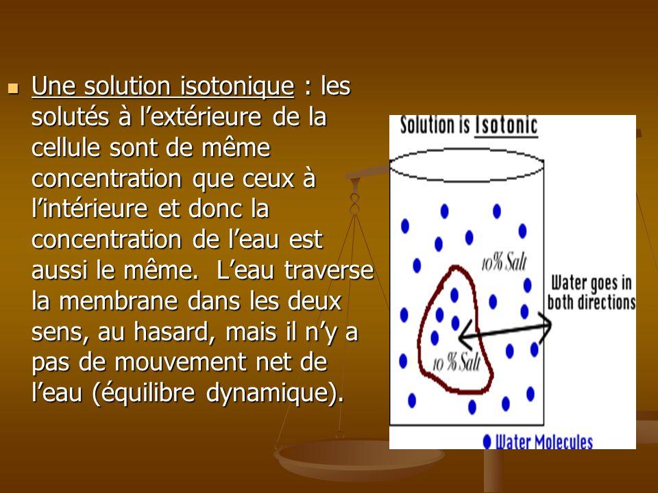 Une solution isotonique : les solutés à lextérieure de la cellule sont de même concentration que ceux à lintérieure et donc la concentration de leau e