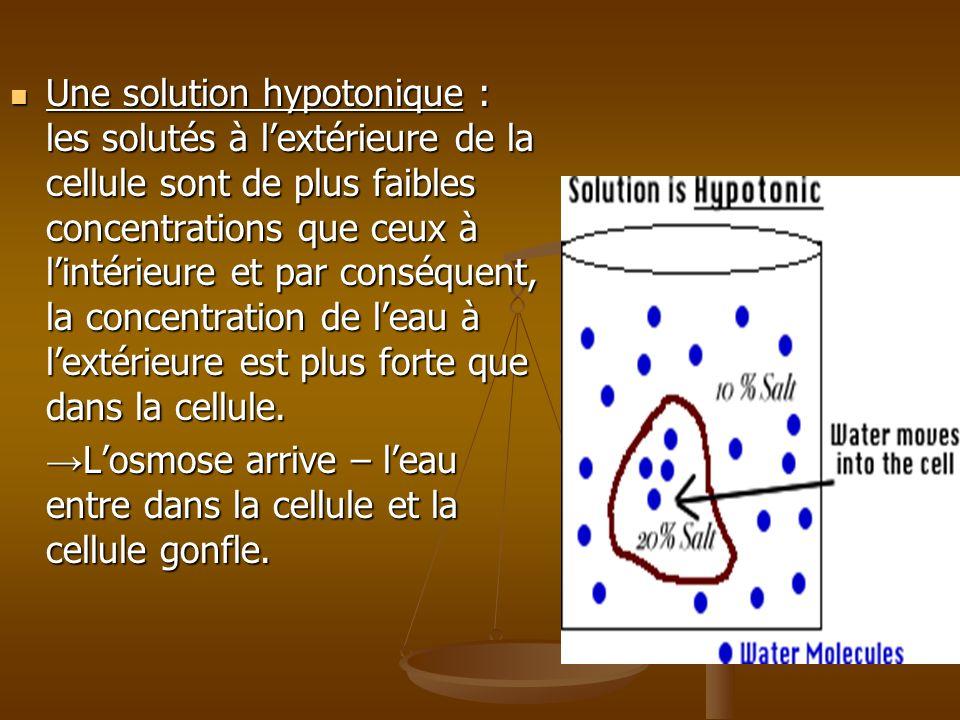 Une solution hypotonique : les solutés à lextérieure de la cellule sont de plus faibles concentrations que ceux à lintérieure et par conséquent, la co