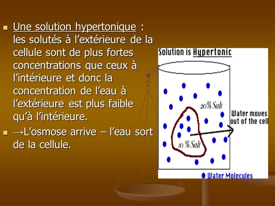Une solution hypertonique : les solutés à lextérieure de la cellule sont de plus fortes concentrations que ceux à lintérieure et donc la concentration