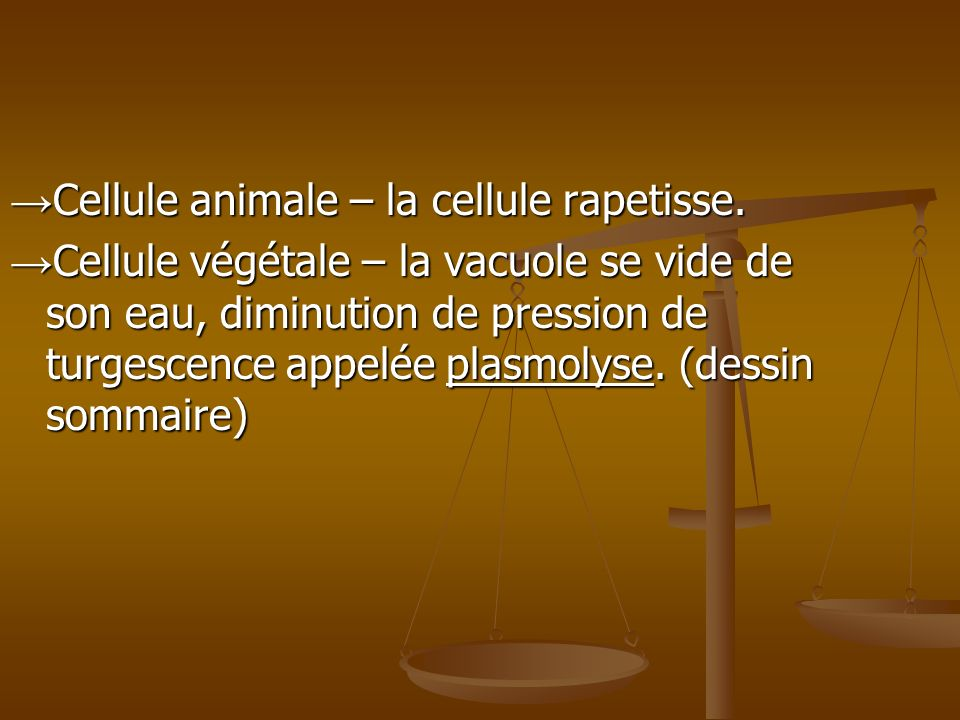 Cellule animale – la cellule rapetisse.Cellule animale – la cellule rapetisse.