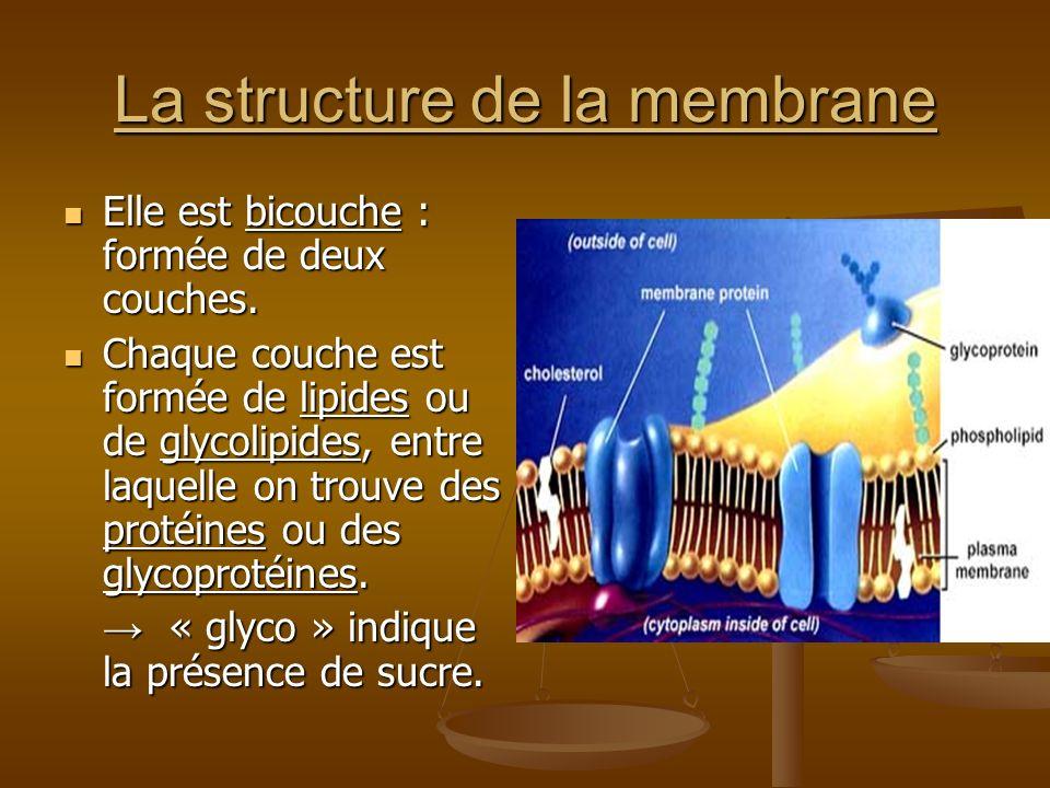 La structure de la membrane Elle est bicouche : formée de deux couches. Elle est bicouche : formée de deux couches. Chaque couche est formée de lipide