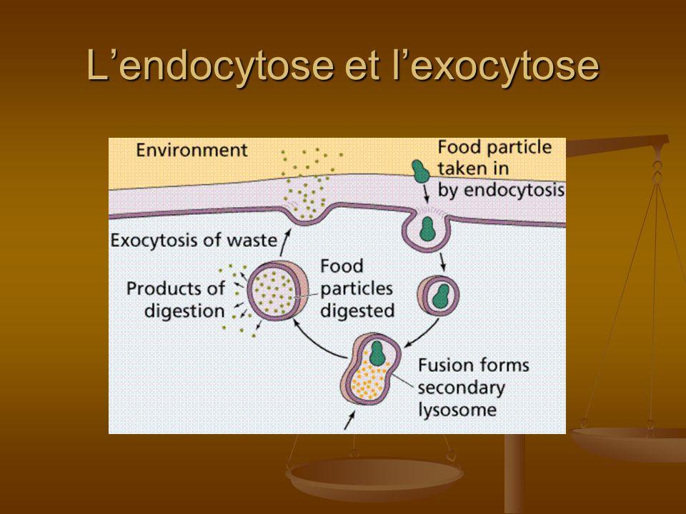 Lendocytose et lexocytose