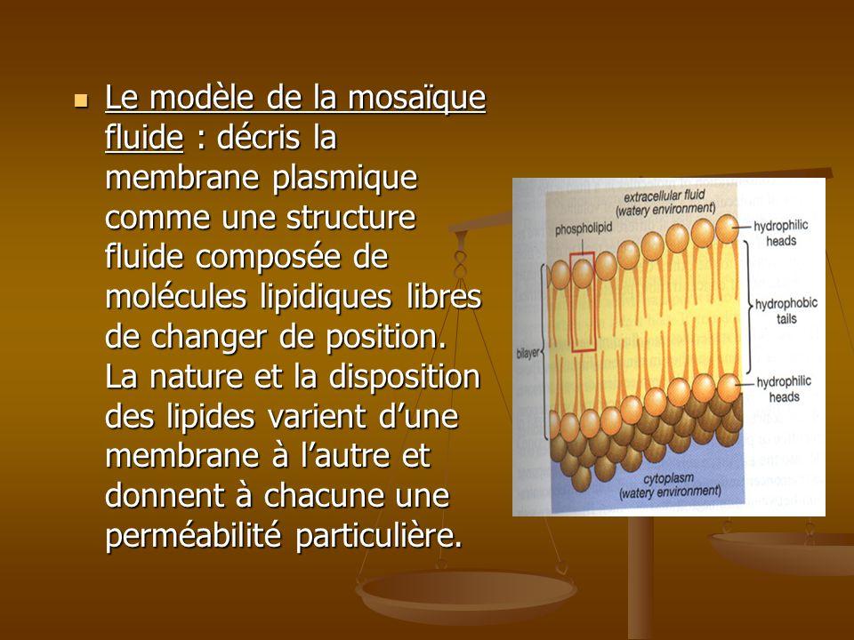 Le modèle de la mosaïque fluide : décris la membrane plasmique comme une structure fluide composée de molécules lipidiques libres de changer de positi