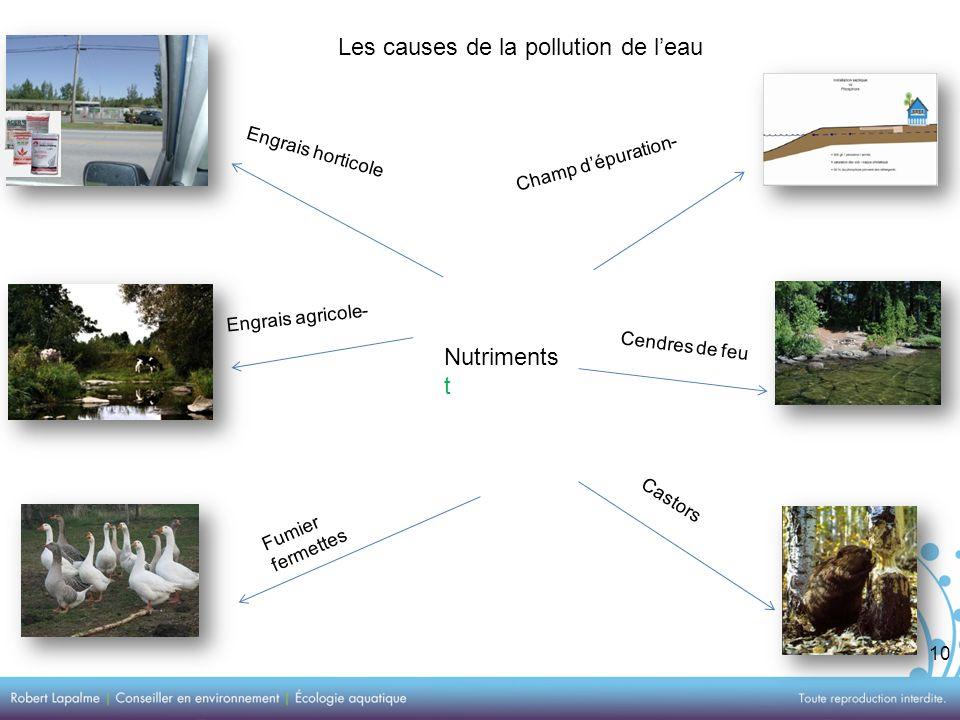 10 Les causes de la pollution de leau Nutriments t Engrais horticole Engrais agricole- Fumier fermettes Champ dépuration- Cendres de feu Castors