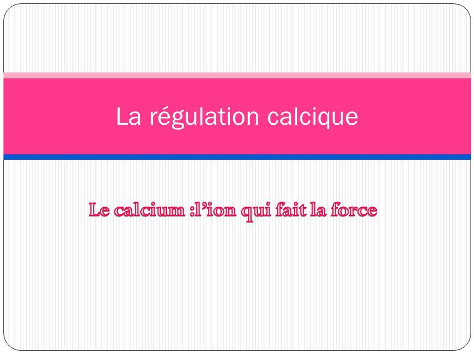 La régulation calcique