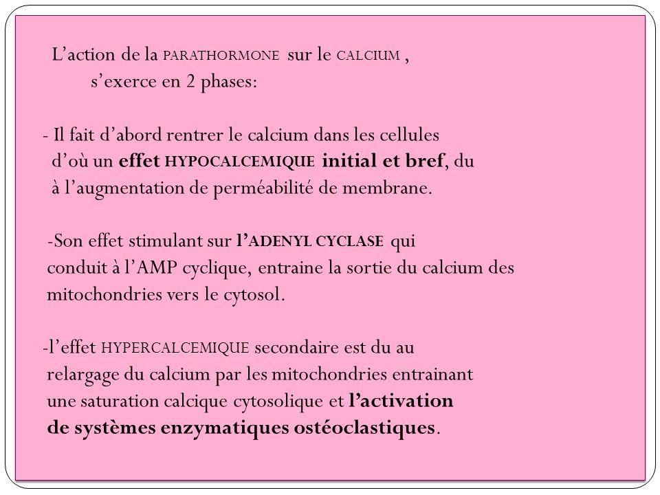 Laction de la PARATHORMONE sur le CALCIUM, sexerce en 2 phases: - Il fait dabord rentrer le calcium dans les cellules doù un effet HYPOCALCEMIQUE init