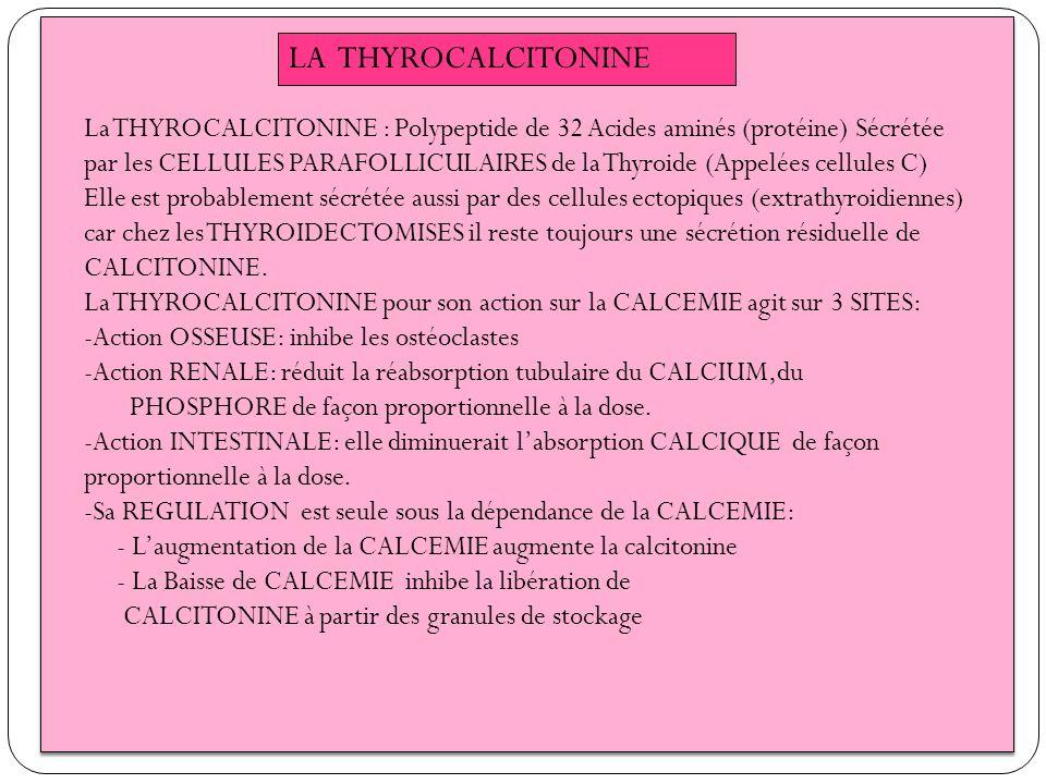 LA THYROCALCITONINE La THYROCALCITONINE : Polypeptide de 32 Acides aminés (protéine) Sécrétée par les CELLULES PARAFOLLICULAIRES de la Thyroide (Appel