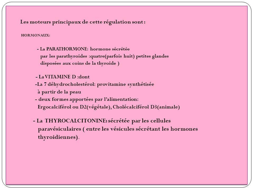 Les moteurs principaux de cette régulation sont : HORMONAUX: - La PARATHORMONE: hormone sécrétée par les parathyroides :quatre(parfois huit) petites g