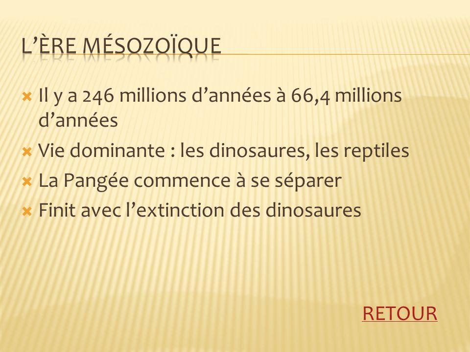 Il y a 246 millions dannées à 66,4 millions dannées Vie dominante : les dinosaures, les reptiles La Pangée commence à se séparer Finit avec lextinction des dinosaures RETOUR