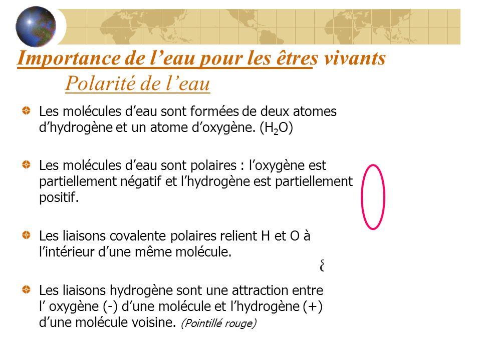 Importance de leau pour les êtres vivants Polarité de leau Les molécules deau sont formées de deux atomes dhydrogène et un atome doxygène. (H 2 O) Les