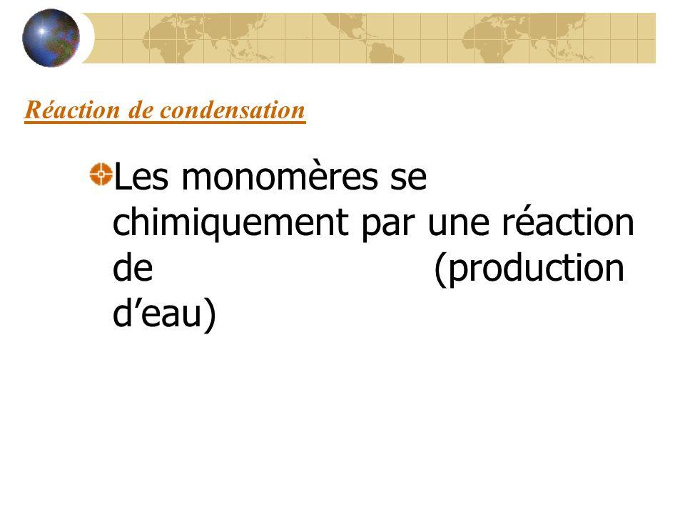 Réaction de condensation Les monomères se lient chimiquement par une réaction de condensation (production deau)