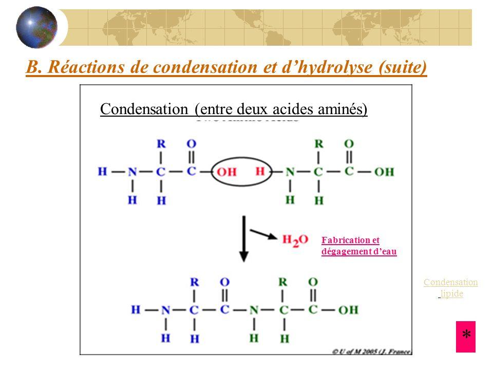 B. Réactions de condensation et dhydrolyse (suite) Condensation (entre deux acides aminés) Fabrication et dégagement deau * Condensation lipide