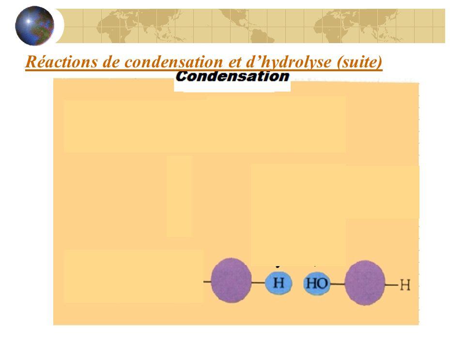 Réactions de condensation et dhydrolyse (suite)