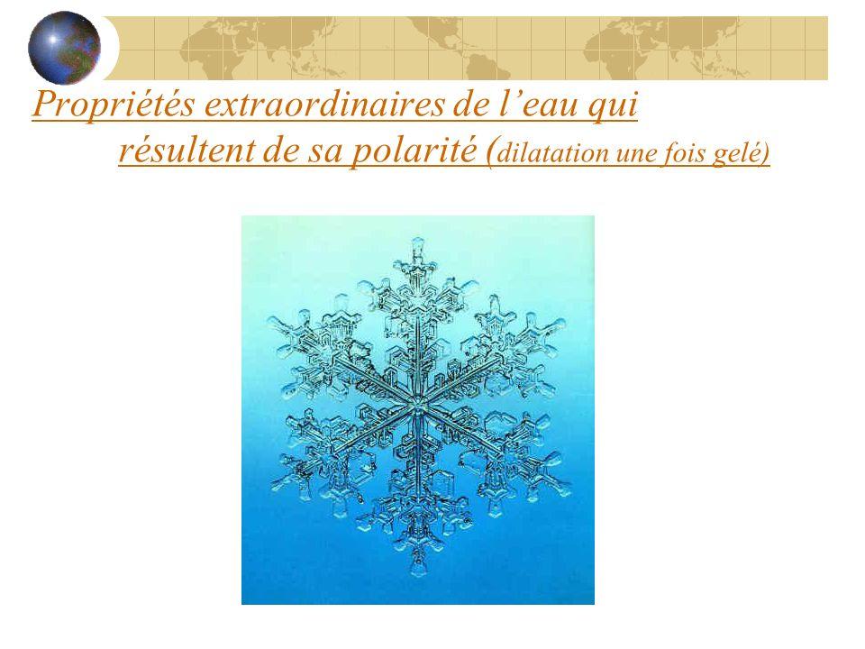 Condensation Les monomères se _____ De leau est ________ Condensation = lient formée Diminution despace