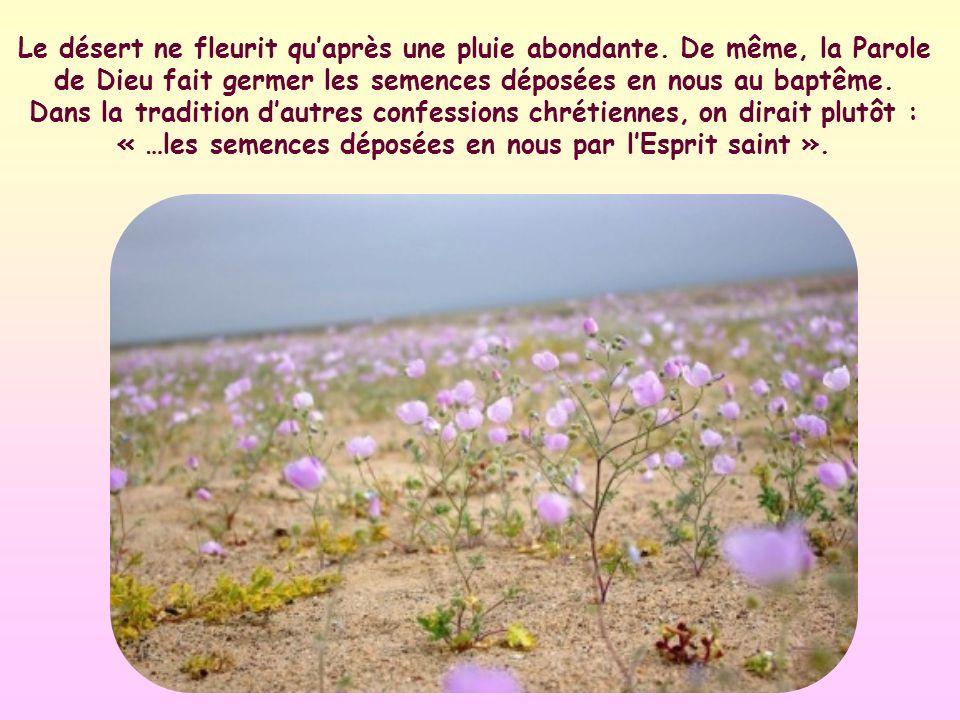 Le désert ne fleurit quaprès une pluie abondante.