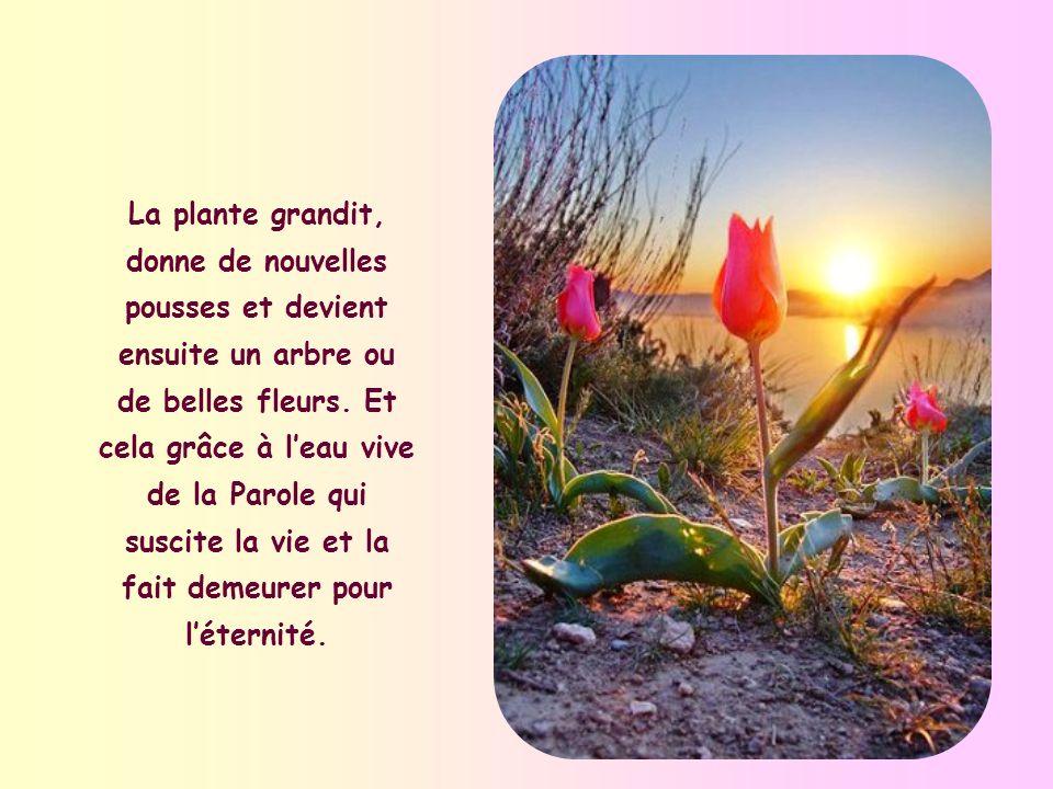 Le désert ne fleurit quaprès une pluie abondante. De même, la Parole de Dieu fait germer les semences déposées en nous au baptême. Dans la tradition d