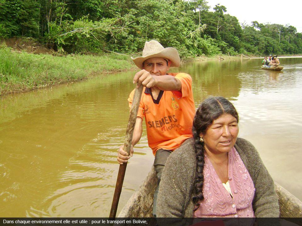 Dans chaque environnement elle est utile : pour le transport en Bolivie,